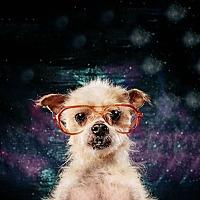 Adopt A Pet :: BENNIE - Seattle, WA