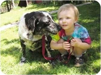 Labrador Retriever/Catahoula Leopard Dog Mix Dog for adoption in Thomaston, Georgia - Patches