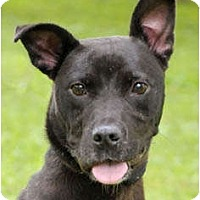 Adopt A Pet :: Soot - Chicago, IL