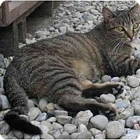 Adopt A Pet :: Princess - Cincinnati, OH