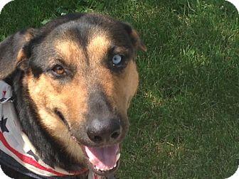 German Shepherd Dog Mix Dog for adoption in Littleton, Colorado - OLIVIA