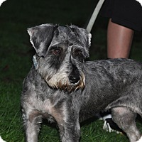 Adopt A Pet :: Daisy - Tumwater, WA