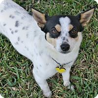 Adopt A Pet :: Bentley - I'm an easy dog! - Yorba Linda, CA