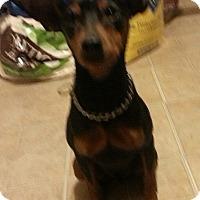 Adopt A Pet :: Kane - North Brunswick, NJ