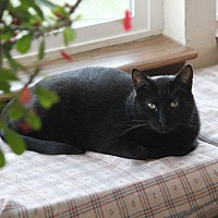 Adopt A Pet :: Duncan - Rawlins, WY