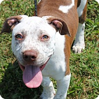 Adopt A Pet :: FRECKLES - Clayton, NJ