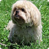 Adopt A Pet :: Tibby - Waldorf, MD