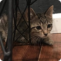 Adopt A Pet :: Oliver - Xenia, OH