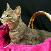Adopt A Pet :: Ivy - Port Charlotte, FL
