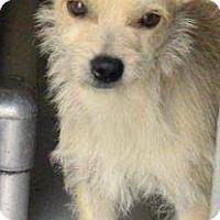Adopt A Pet :: Aspen - Boulder, CO