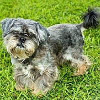 Adopt A Pet :: Sudoku - Missouri City, TX
