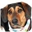Photo 1 - Hound (Unknown Type) Mix Dog for adoption in Cincinnati, Ohio - Lucy