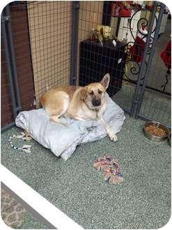 German Shepherd Dog Dog for adoption in Simi Valley, California - Honey