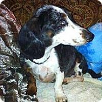 Adopt A Pet :: Matilda - Somers, CT