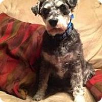 Adopt A Pet :: George - North Benton, OH