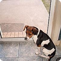 Adopt A Pet :: Anna - Russellville, AR