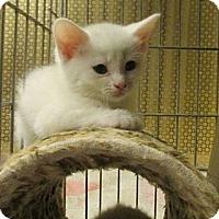 Adopt A Pet :: Makar - Acme, PA
