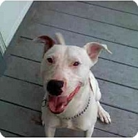 Adopt A Pet :: 8 Months Old - Alliance, OH
