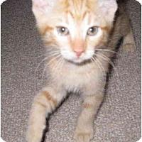 Adopt A Pet :: Scooter - Mesa, AZ