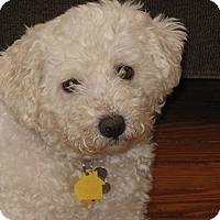 Adopt A Pet :: Vayda - Mt Gretna, PA