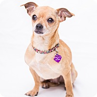 Adopt A Pet :: Betty - Oakland, CA