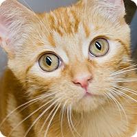 Adopt A Pet :: Cupcake - Irvine, CA