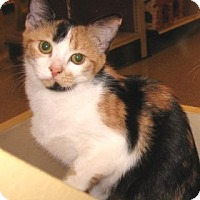 Adopt A Pet :: Allie - Colmar, PA