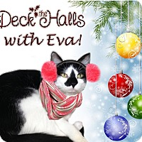Adopt A Pet :: Eva - East Brunswick, NJ