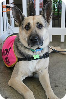 German Shepherd Dog Dog for adoption in Los Angeles, California - Mama Bear