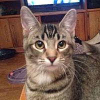 Adopt A Pet :: Sarge - Westlake Village, CA