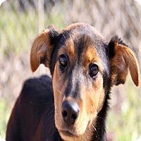 Adopt A Pet :: Selena pending adoption - East Hartford, CT