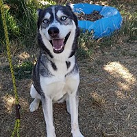 Adopt A Pet :: Mya - Orland, CA