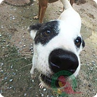Adopt A Pet :: Lance - Vancouver, BC