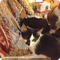 Adopt A Pet :: Elsie - Fowlerville, MI