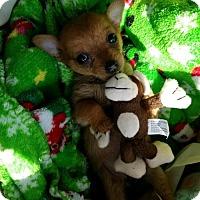 Adopt A Pet :: Lexington - Brooklyn Center, MN