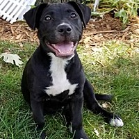 Adopt A Pet :: Madison - Maple Grove, MN