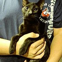 Adopt A Pet :: Harry - San Tan Valley, AZ