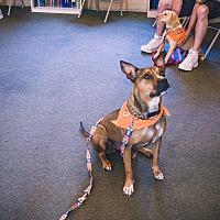 Adopt A Pet :: Jayda - Indian Trail, NC