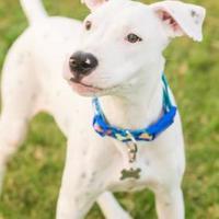 Adopt A Pet :: Henry - Santa Fe, TX