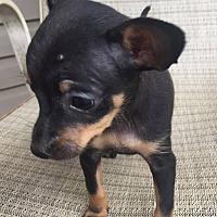 Adopt A Pet :: Fiona - Warner Robins, GA
