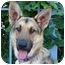 Photo 4 - German Shepherd Dog Dog for adoption in Los Angeles, California - Stella von Bremen