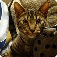 Adopt A Pet :: JASPER - Diamond Bar, CA