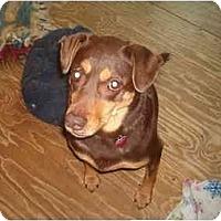Adopt A Pet :: Hershey - North Jackson, OH