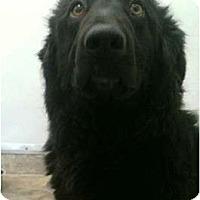Adopt A Pet :: Nikki - BC Wide, BC