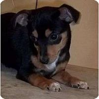 Adopt A Pet :: Unwin - Staunton, VA