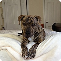 Adopt A Pet :: Zeus - Vernon Hills, IL