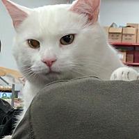 Adopt A Pet :: Isaac - Port Republic, MD