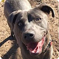 Adopt A Pet :: Meredith - Lubbock, TX