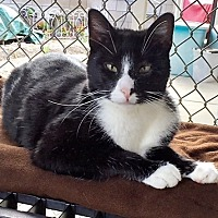 Adopt A Pet :: Ekat - Seal Beach, CA