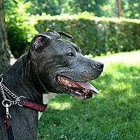 Adopt A Pet :: Skylar - Acushnet, MA